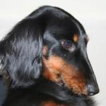 Alyna 01-03-2011 (moeder Vonya)